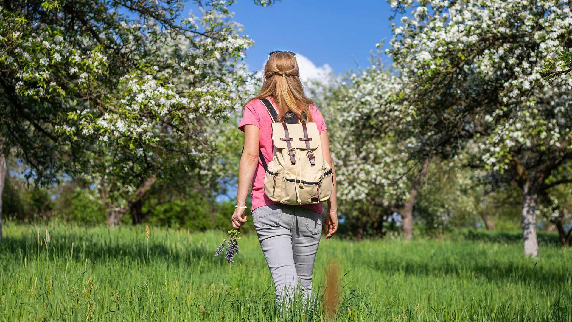 La fioritura dei meli intorno a Merano