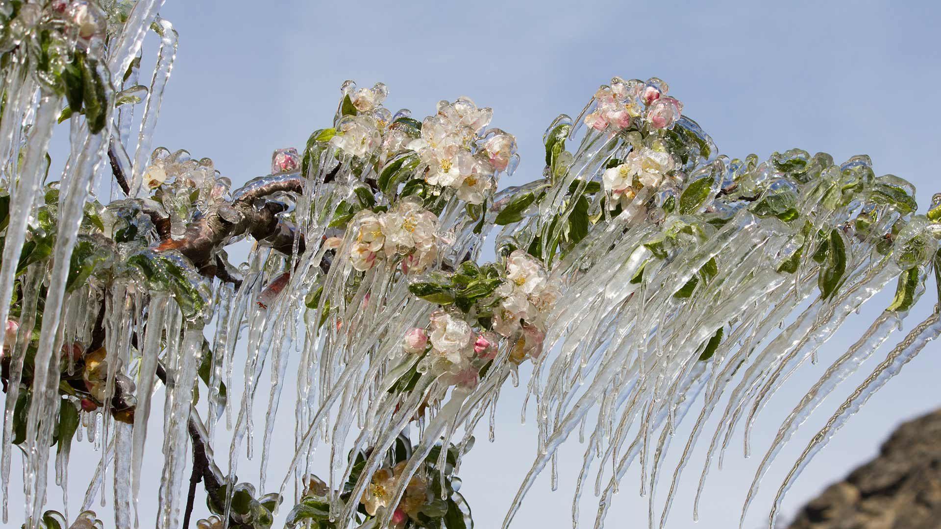 I fiori di ghiaccio