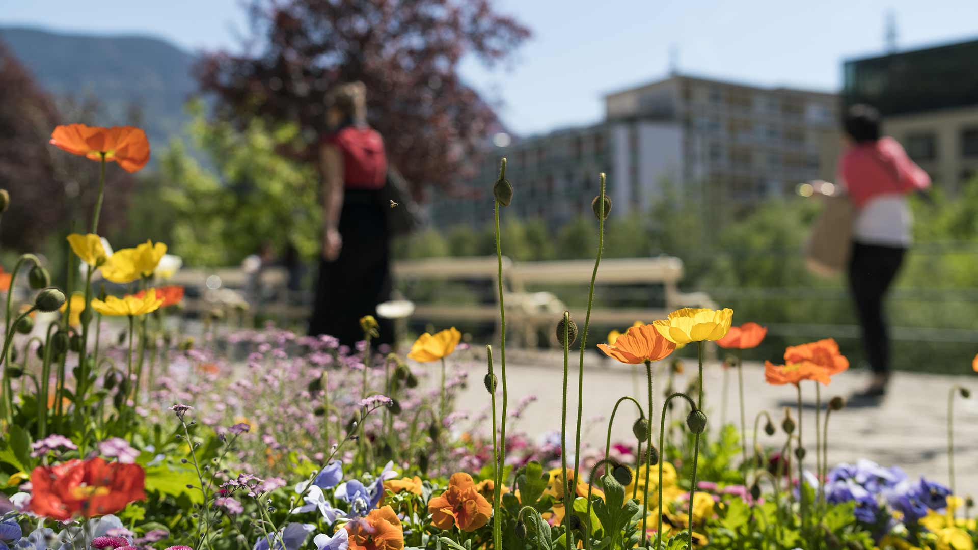 Città di cura - Primavera