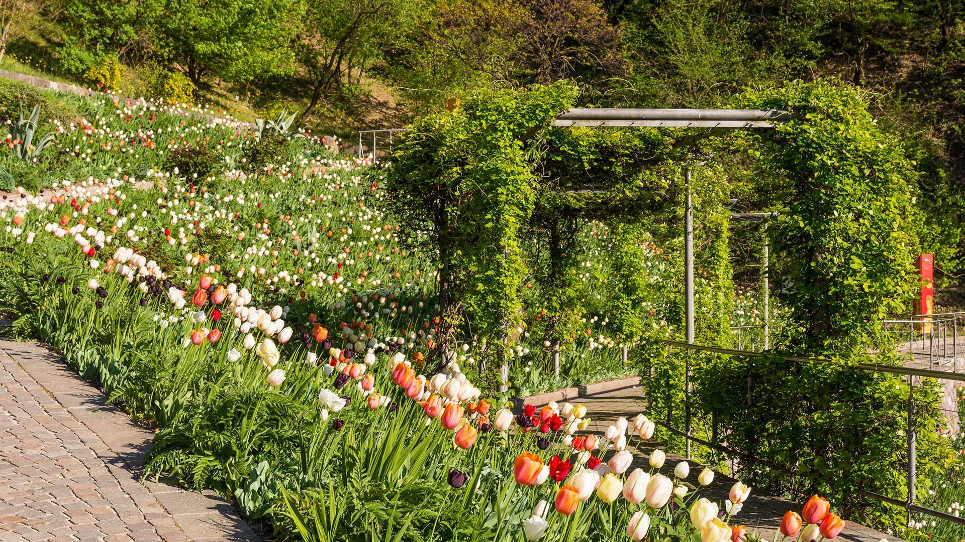 Primavera - Castel Trauttmansdorff