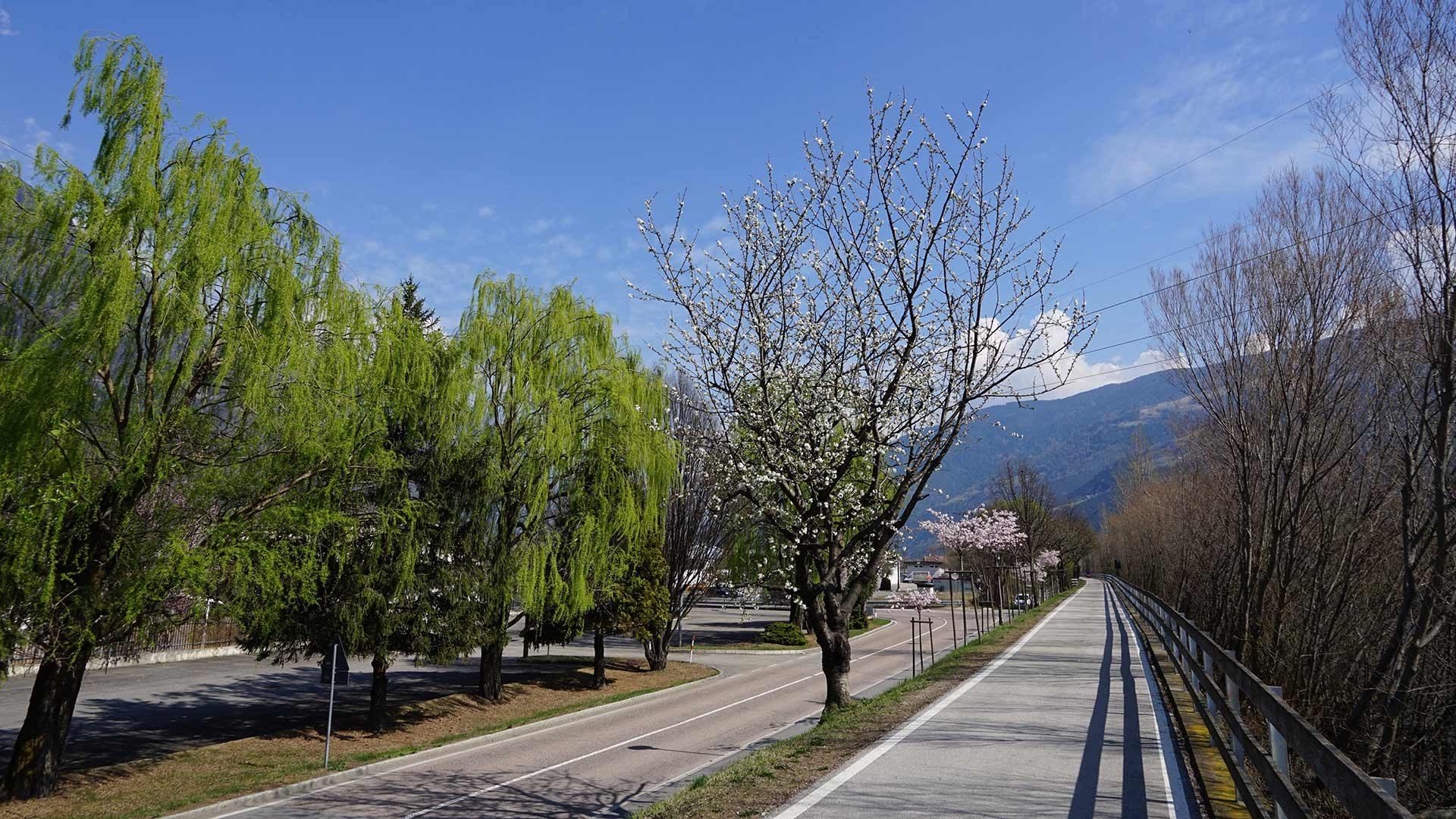 Tour Monte Betulla