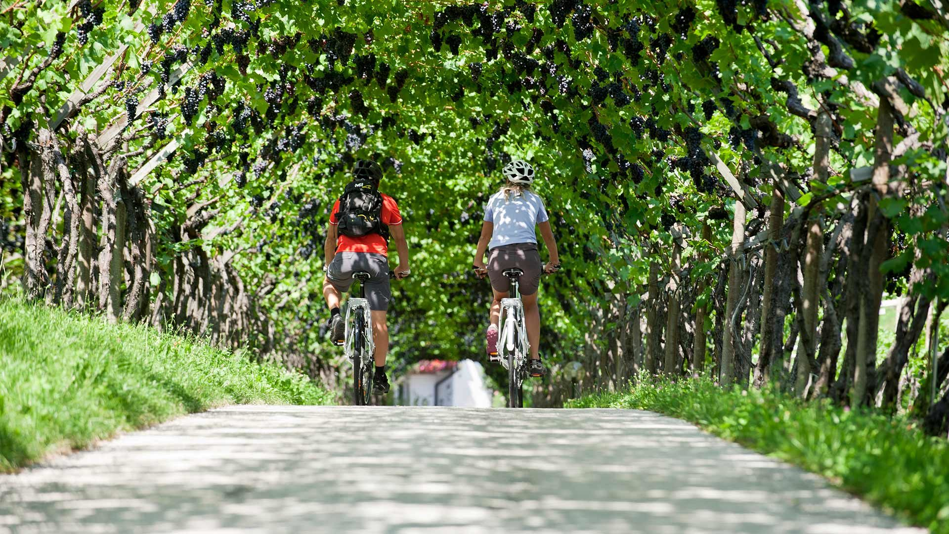 Tour in bicicletta Marlengo - Caldaro
