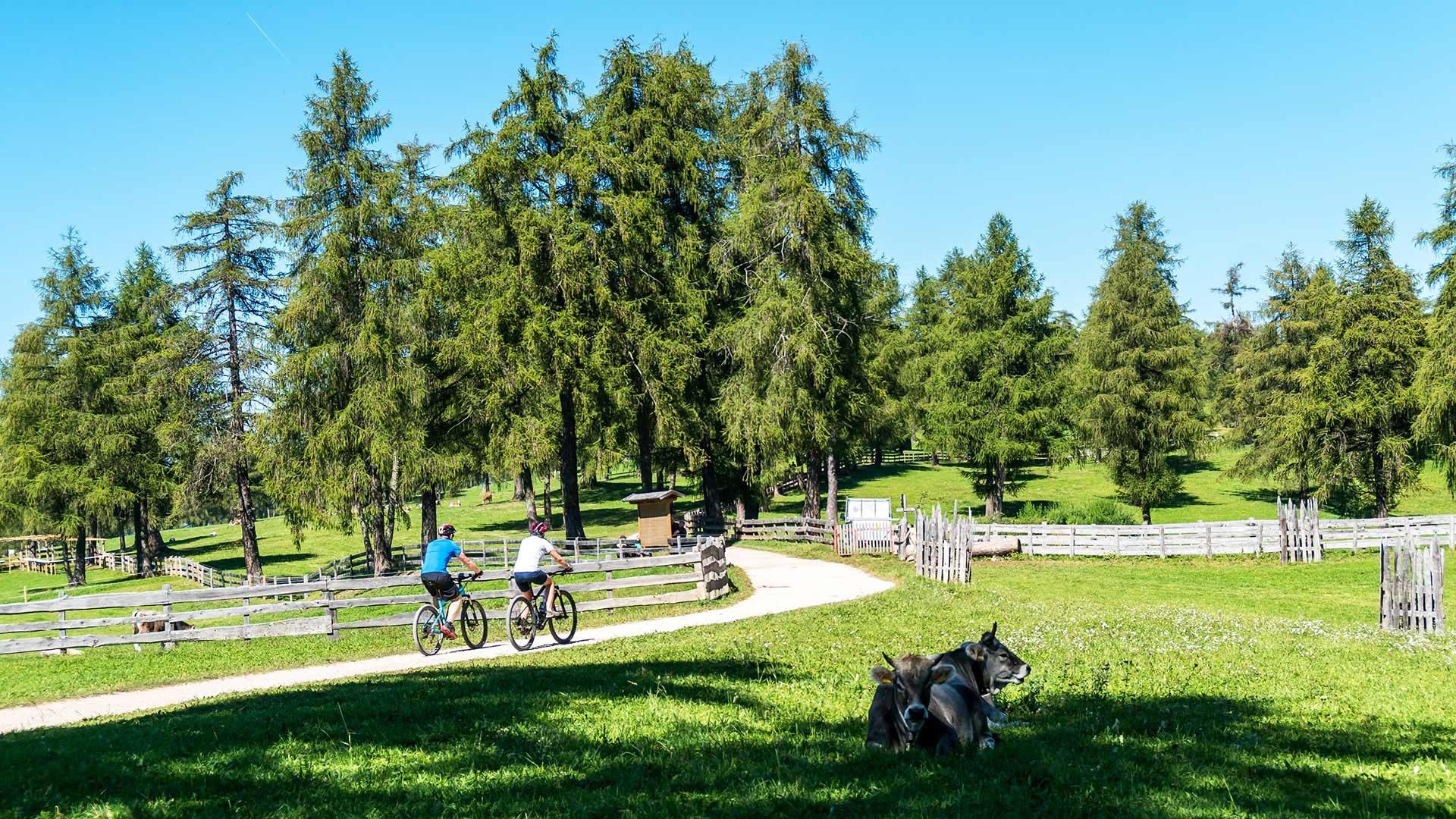Giro in bicicletta alla malga Pfistrad
