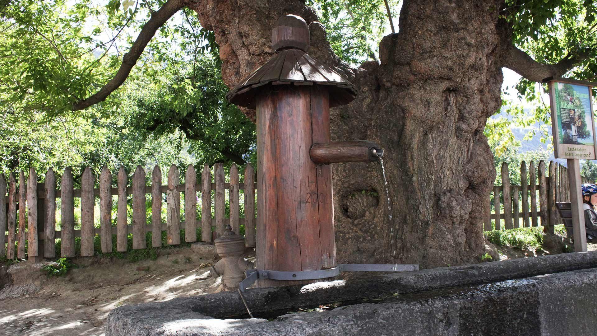 Monumento naturale dell'antico acero e vecchia fontana