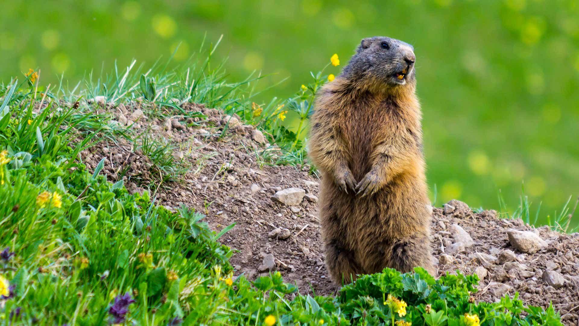 Centro Visite Gruppo di Tessa - Marmotta