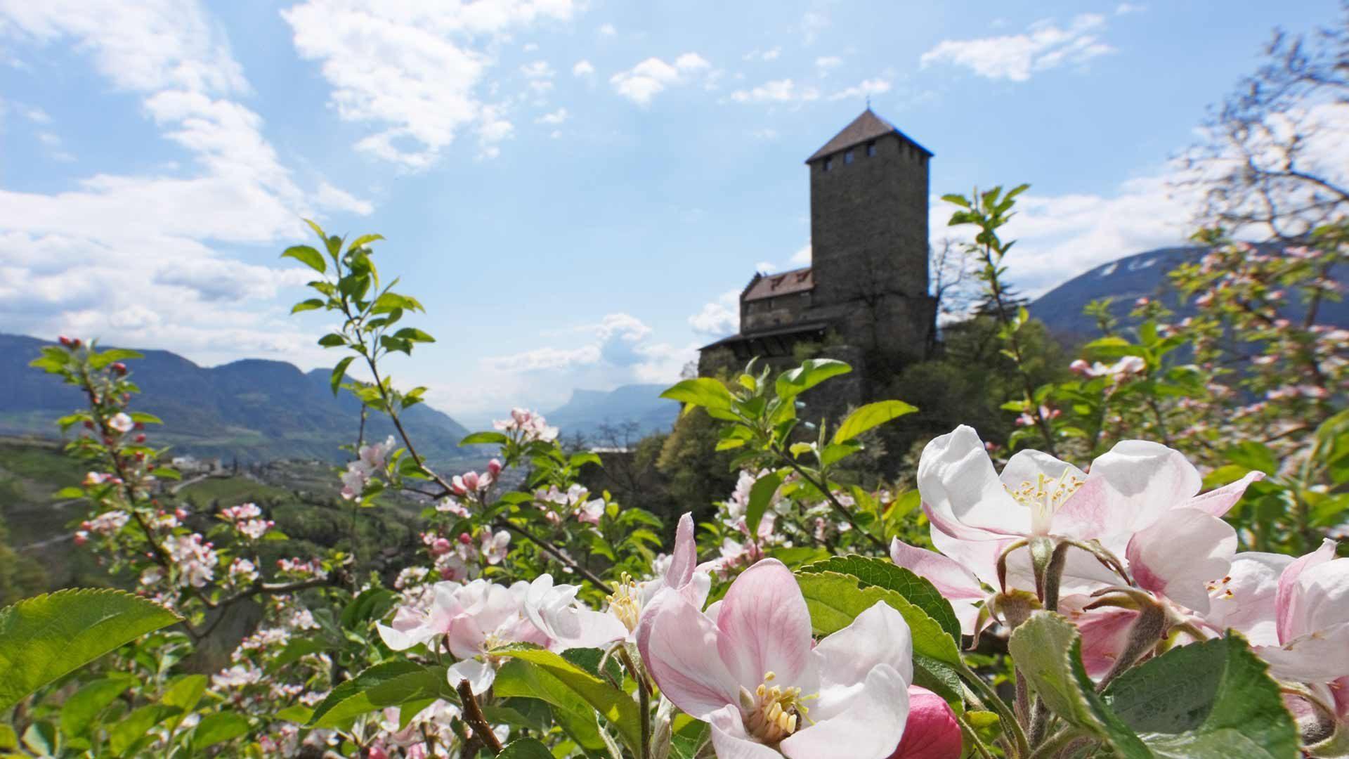 Castel Tirolo - Primavera