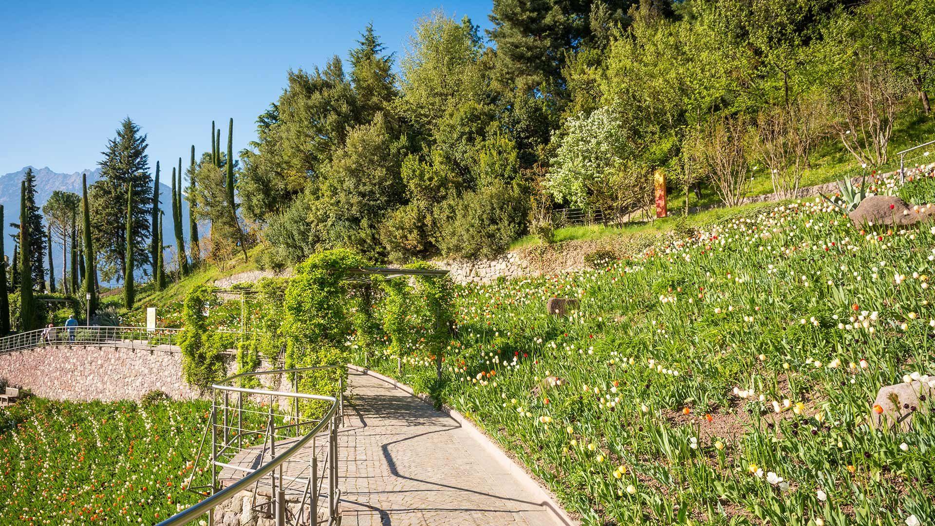 Prato dei tulipani - Giardini di Castel Trauttmansdorff