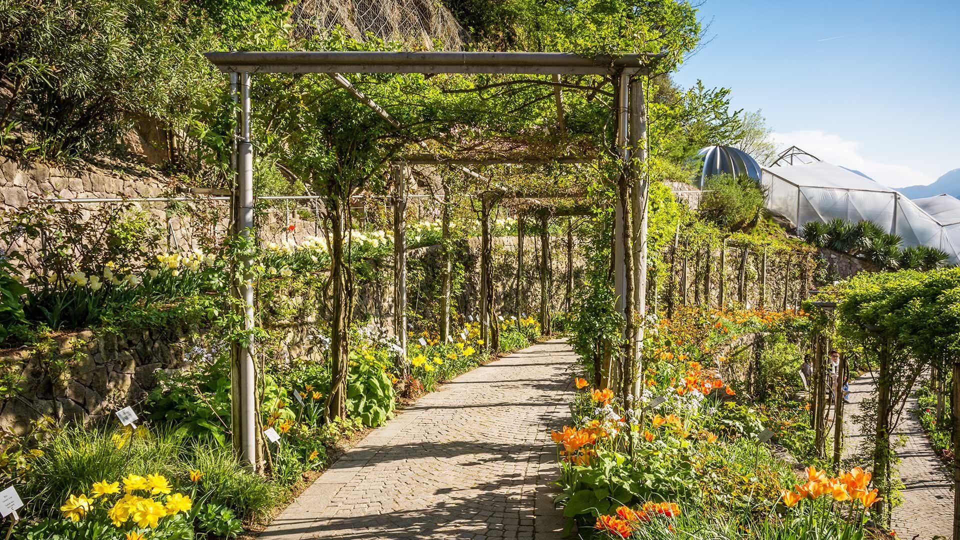 Fiori - Giardini di Castel Trauttmansdorff