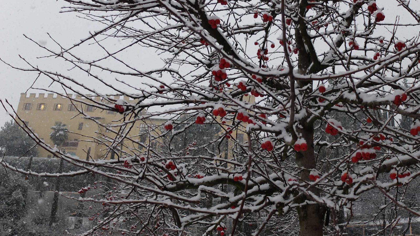 I Giardini di Castel Trauttmansdorff in inverno