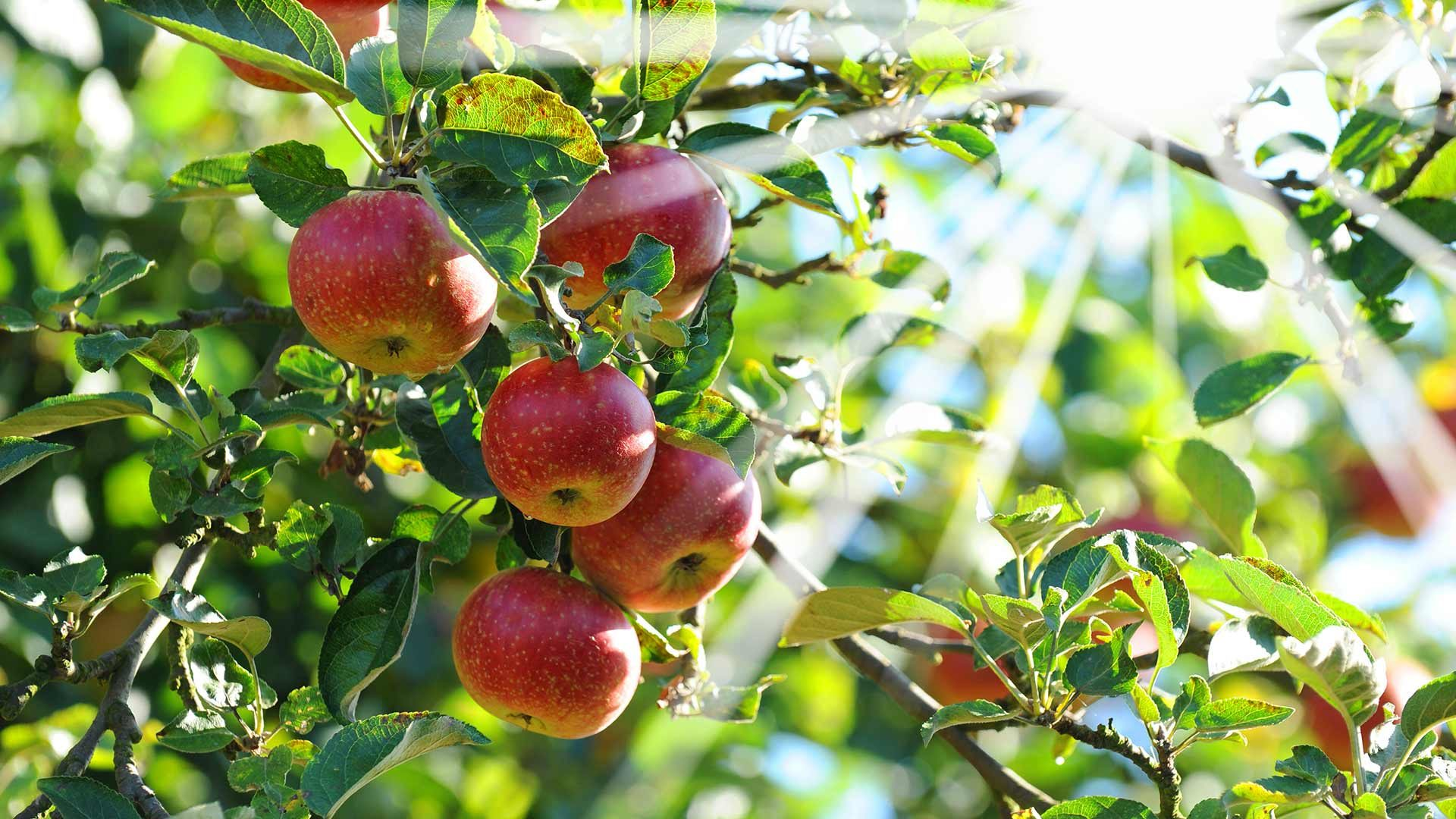 Il paese delle mele – Guida a Plaus
