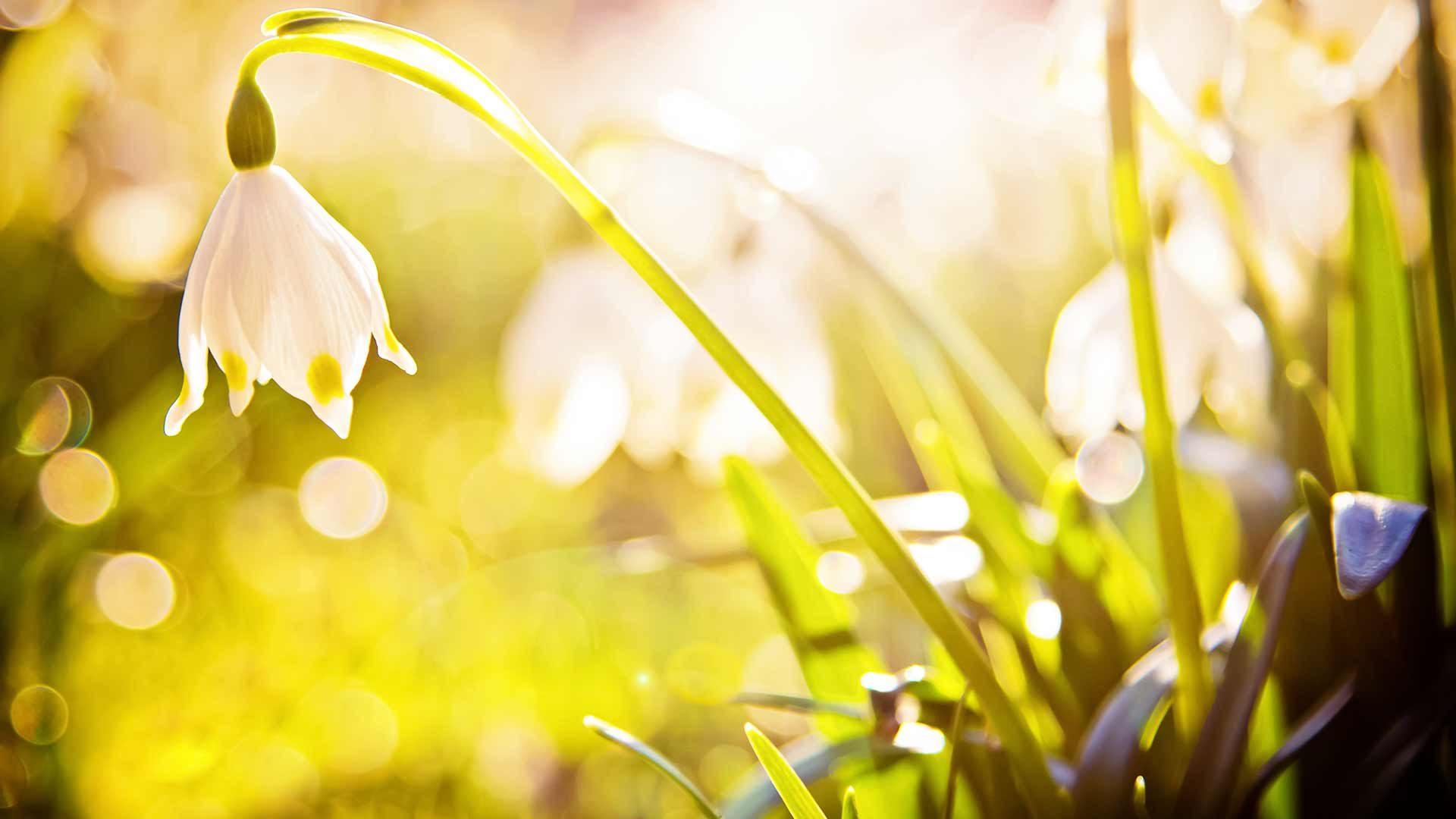 Naturno Primavera Festival