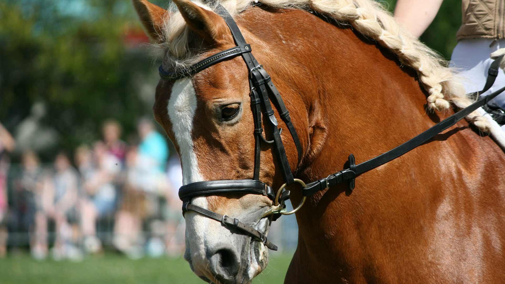Corse tradizionali dei cavalli