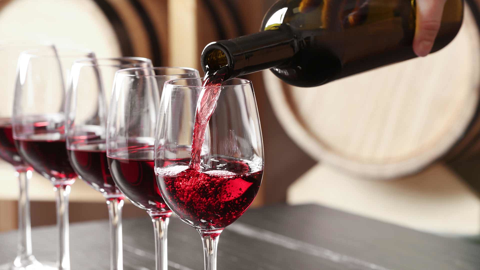Visita guidata della cantinan dei vini