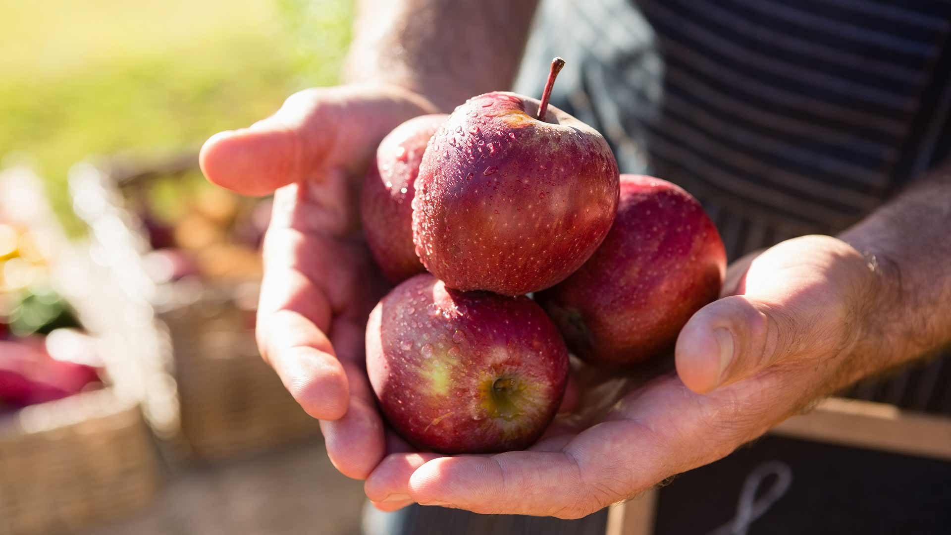 A spasso per i frutteti - Parcines