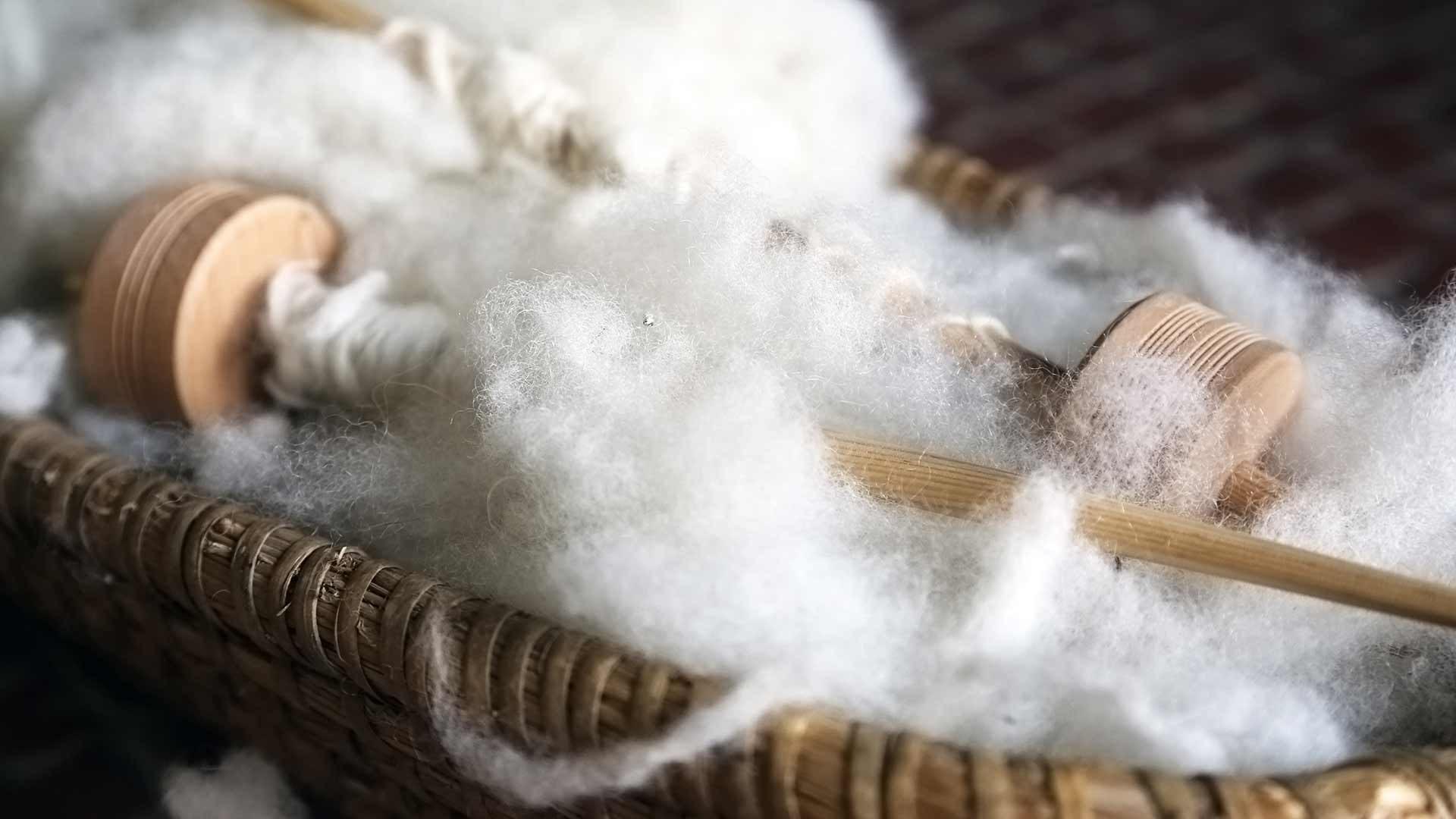 Pecore e lana a S. Leonardo