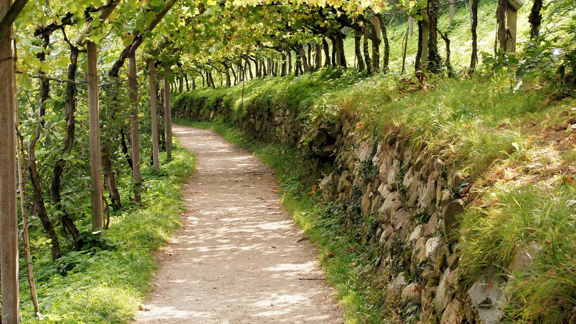 Sentiero della Roggia di Brandis - Escursione