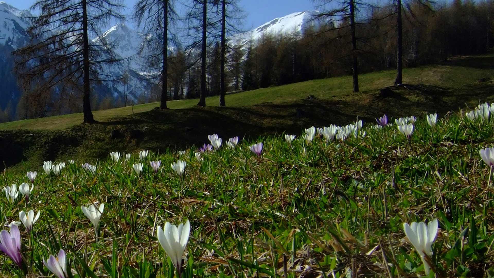 Al Piccolo Monte Cornicolo - Proves