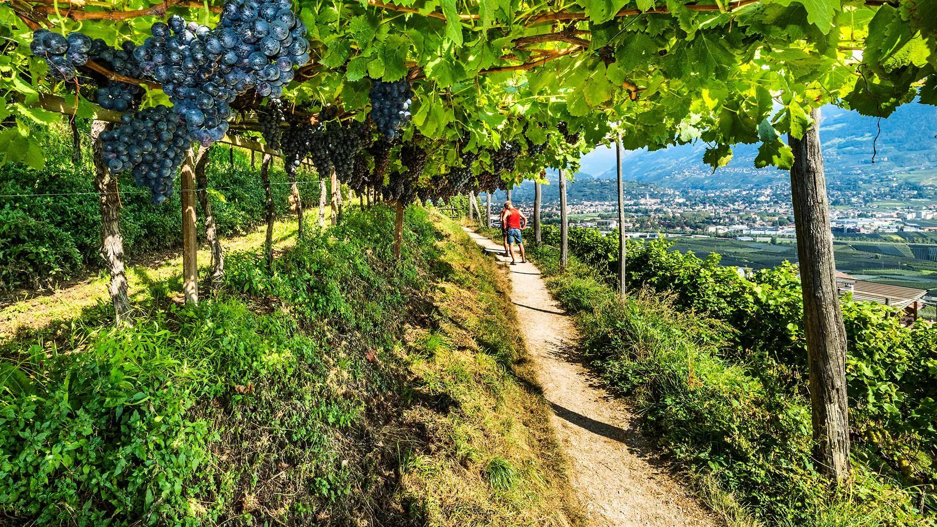 Sentiero della Roggia di Marlengo in Alto Adige